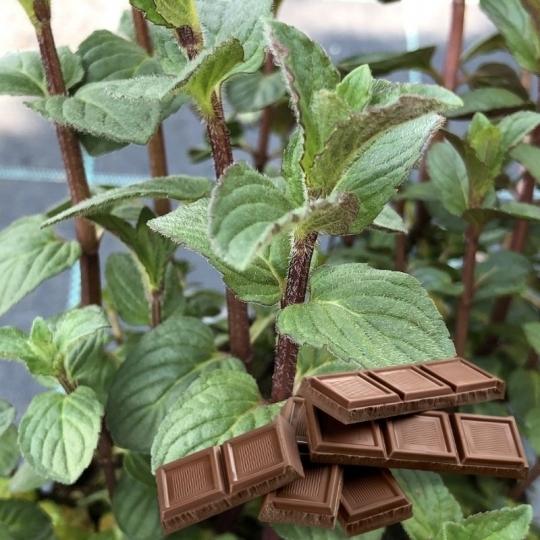 Mäta čokoládová 'CHOCOLATE', kont. 1l