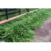 Borievka rozprestretá, Juniperus horizontalis ´Jade River´, kont.2l