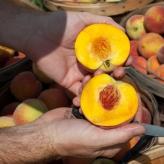 Organické hnojivo-kôstkové ovocie,Rokohumin,50g