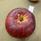 Jabloň RUBINOLA, zimná, rezistentná, podp. M9, kont. 9 l