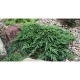 Borievka rozprestretá, Juniperus horizontalis ´Pancake´, kont.2l