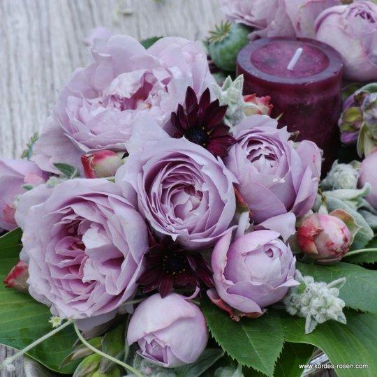 Ruža NOVALIS ®,  mnohokvetá, KORDES, kont. 2l