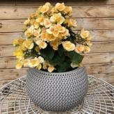 Kvetináč SPLOFY BOWL 2v1
