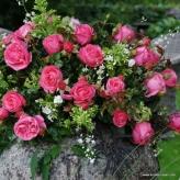 Cherry Lady - ruža veľkokvetá, čajohybrid, KORDES