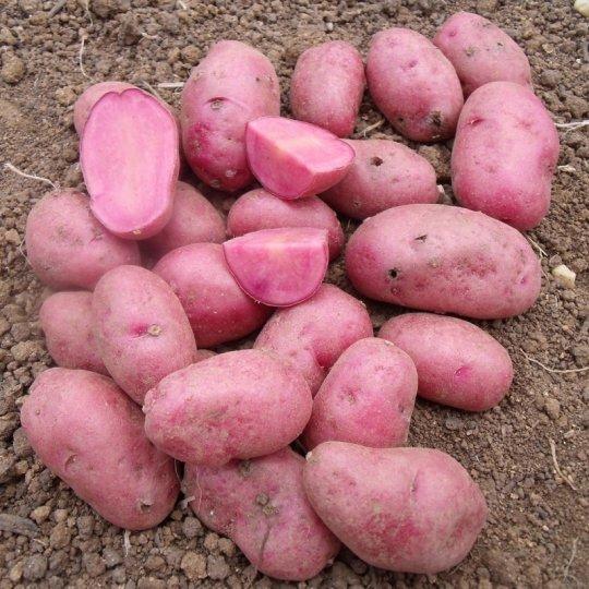 Zemiaky sadbové Mulberry Beauty, 1,2 kg