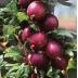 Červený egreš 'HINNONMAKI ROT', stromčekový, 80-100cm