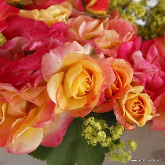 FIREBIRD® ruža mnohokvetá, KORDES, kont. 2l