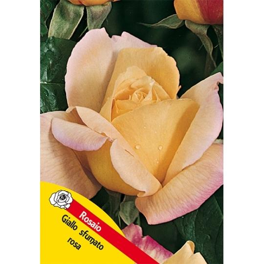 Ruža na kmienku, ŽLTÁ, kvetináč 10l