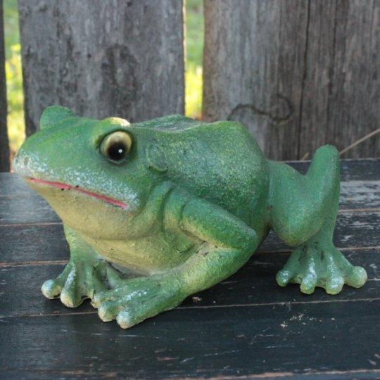 Žabka zelená