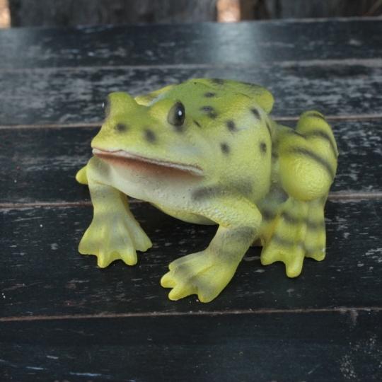 Žabka zelená, dekorácia