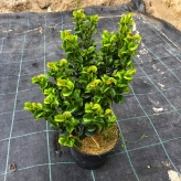 Leukote hybridné 'CURLY RED'® 20-30cm, kont. 2,5l