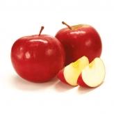 Jabloň IDARED, zimná odroda, voľný koreň