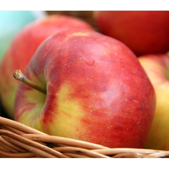 Jabloň jesenná 'LIPNO®', podpn. M9