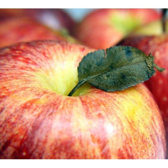 Jabloň GALA, jesenná,