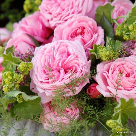 Rosengräfin Marie Henriette ®, mnohokvetá ruža, kont. 2l